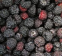bigstock_Black_Raspberries_3735681